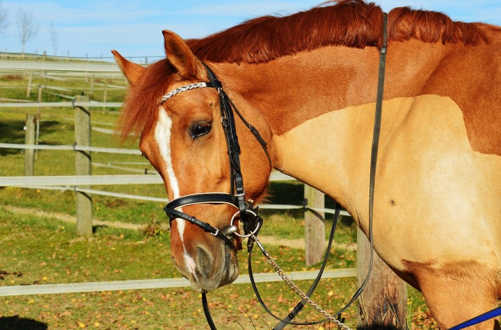 horse-1036148_1920.jpg