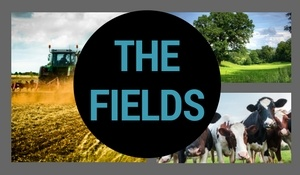 1609201727007556-the_fields_front_page