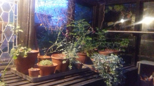 greenhouse8